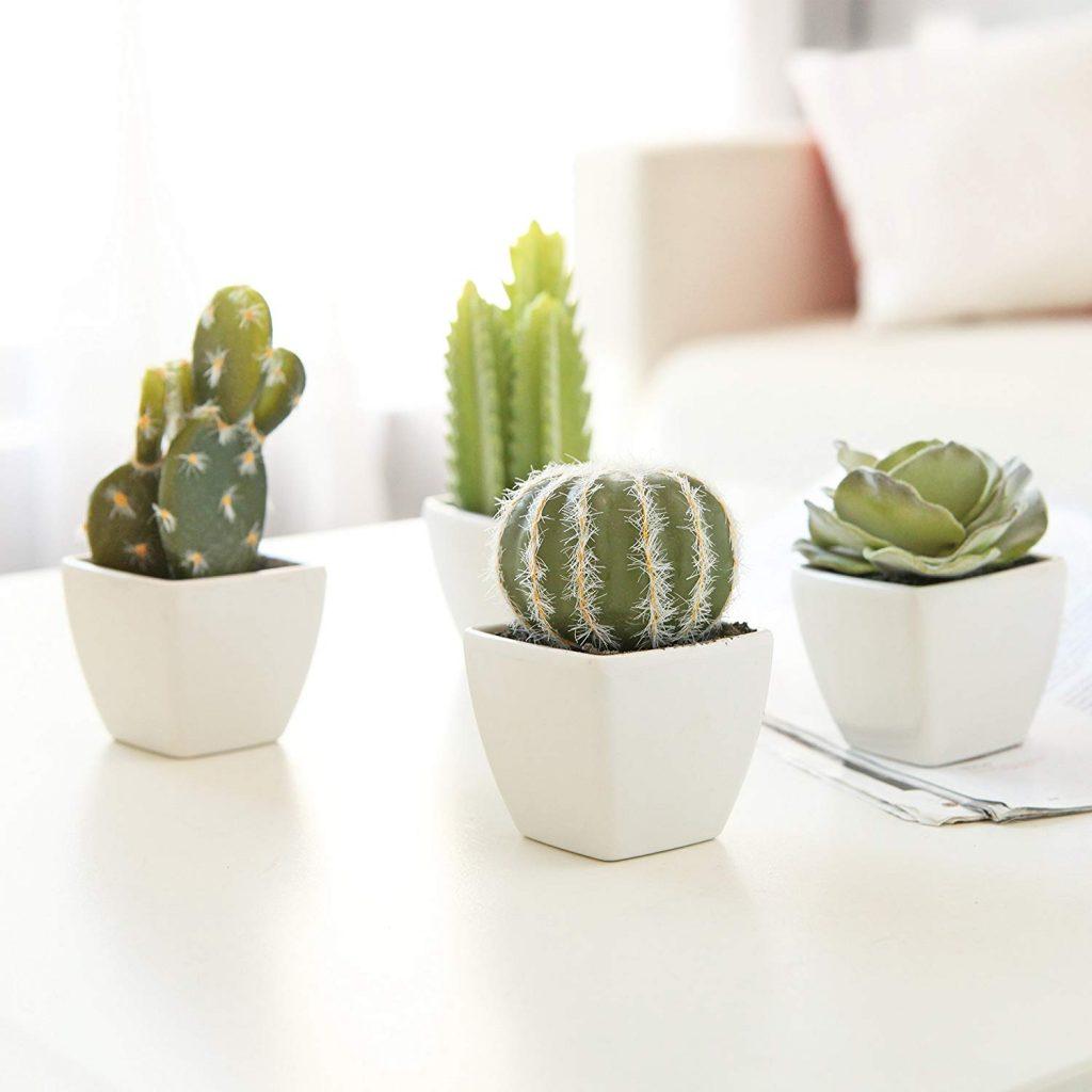 Miniature cacti plants