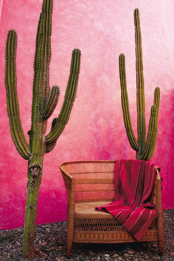A beautiful bright pink Mexican inspired styled courtyard with a outdoor wicker bench seat surrounded by cacti and pebbles. #outdoorwickerfurniture #mexicaninspiredoutdoorpatio #pinkcourtyard #courtyardideas @chloedominik